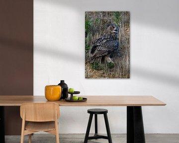 Eurasian Eagle Owl ( Bubo bubo ) sitting in the slope of a gravel pi van wunderbare Erde