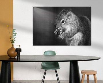 Ein Eichhörnchen von Wendy Tellier - Vastenhouw