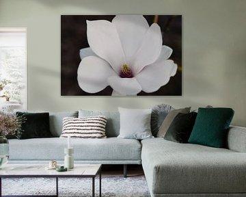 Magnolia portrait von Dana Marin