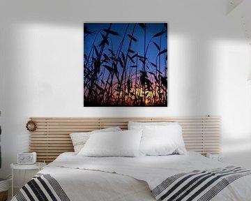 Cornfield at sunset van Evert Koster