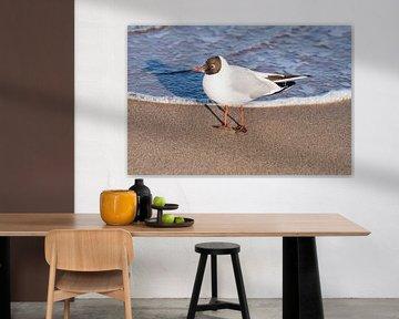 Lachmöwe am Strand von Gunter Kirsch