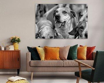 Foxhounds in zwart wit von Wybrich Warns