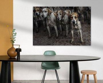 Foxhounds van Wybrich Warns