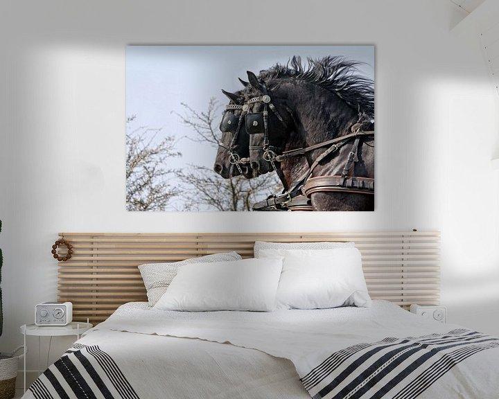 Sfeerimpressie: Drie Friese paarden van Wybrich Warns