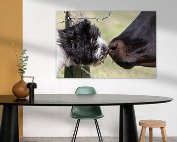 Schapendoes pup met koe sur Wybrich Warns