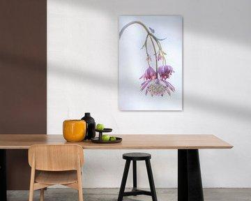 Flower, bloem, zeeuwsknoopje van Nelleke Zijnstra