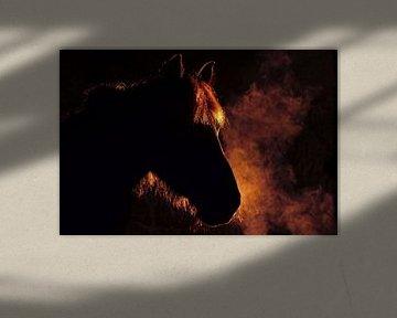 Fries paard in stoom sur Wybrich Warns