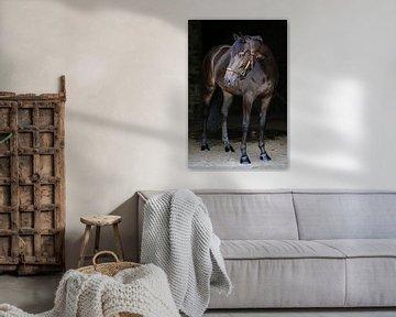Pony aan de muur 1 sur Wybrich Warns