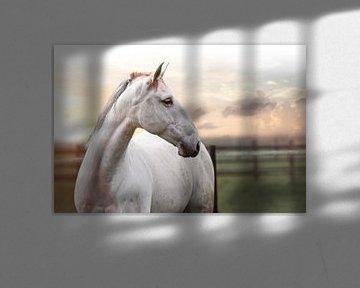 Paard aan de muur 4 van Wybrich Warns