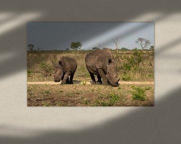 Nashorn mit Nachwuchs von Ingrid Sanders