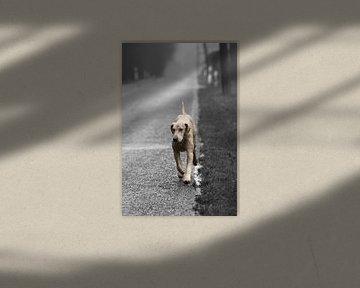 Foxhound von Wybrich Warns