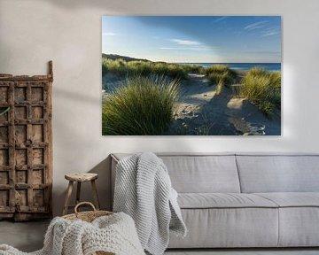 Casque d'herbe sur la plage de Renesse et de la mer du Nord.