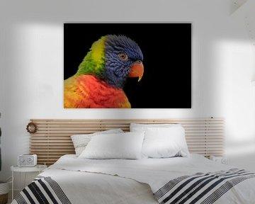 Lori, een kleine papegaai van Gert Hilbink