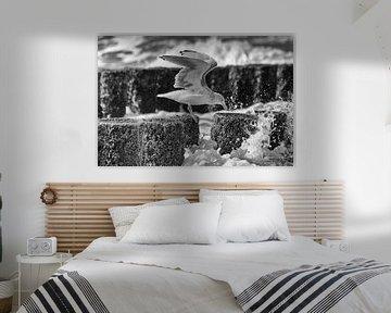 Seagull eating in the storm van Tonny Eenkhoorn- Klijnstra