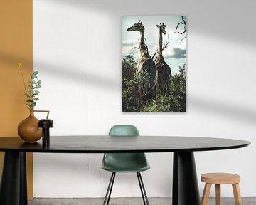 Girafes. sur Niels Jaeqx