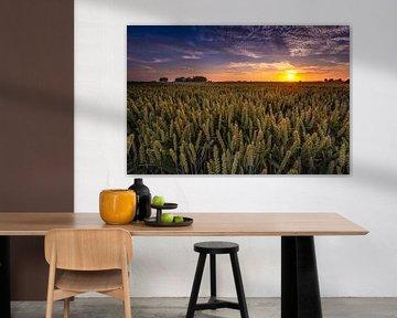 Graanvelden Groningen sur Arjan Battjes