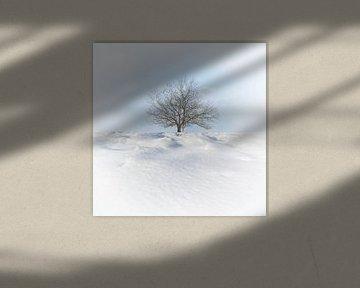 Winter in Salland von Alied Kreijkes-van De Belt