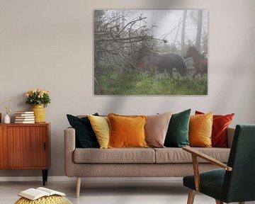Wild horses in the fog. von Evert Koster