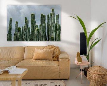 Sierlijke cactussen met gele hoedjes van WeLeaf (Zoë & Olivier)