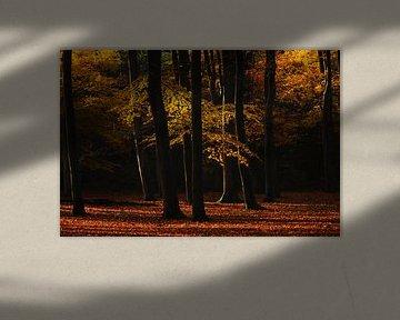Leuvenumse bos herfst van Rick Kloekke