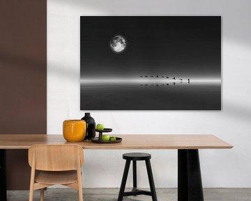 Dierenrijk – Ganzen die bij volle maan opstijgen