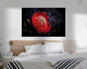 Blume auf schwarzem Hintergrund von Liberty Ragazza Biesma