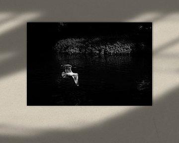 Een vliegende meeuw von Marije van der Vies