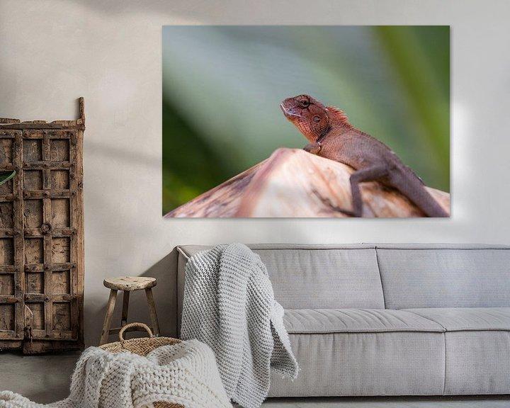 Beispiel: Orientalische Garteneidechse (Oriental garden lizard) von Thijs van den Broek
