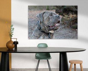 Porträt eines Bandog-Hundes von Allerlei foto's