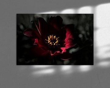 Rood/Zwart van Ralph Hoeberechts