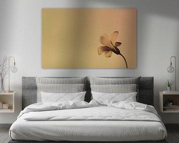 Flower von Ralph Hoeberechts