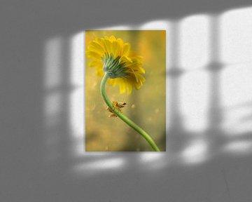 kikker en bloem