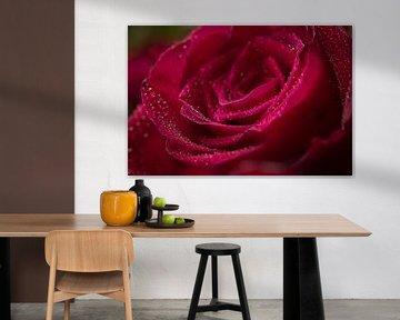 Eine rote Rose mit Wassertröpfchen von Jefra Creations