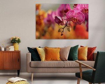 Orchideeën van Elle Elskamp