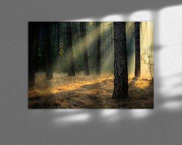 Lumière à travers les arbres dans une région naturelle de Belgique sur Jos Pannekoek