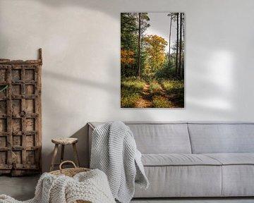 Bospad in de herfst van Mayra Pama-Luiten