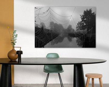 Mist, ein Spinnennetz und die Sonne, die brechen will ... von Natascha Worseling