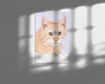 Maine Coon kitten (schattig!) #2 van Jelte Bosma