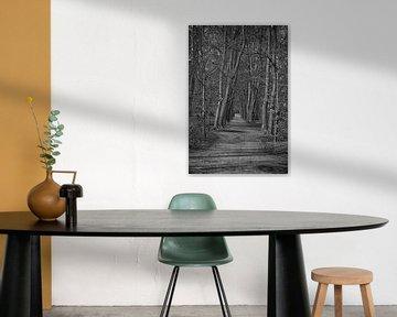 Zwart wit foto van een bos von Elbertsen Fotografie