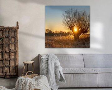 Warm zonlicht tussen een knotwilg van Michel Knikker