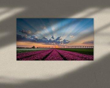 Niederländisches Tulpenfeld, Beemster von Danny Leij