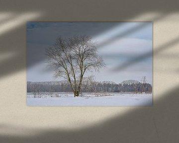 Iep in een winters sneeuwlandschap