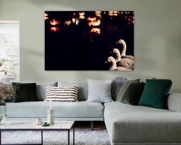 Zwanenmeer von Tamara van Kilsdonk