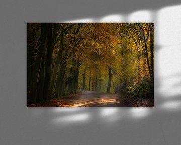 Herfst in Goirle van Miranda Rijnen Fotografie