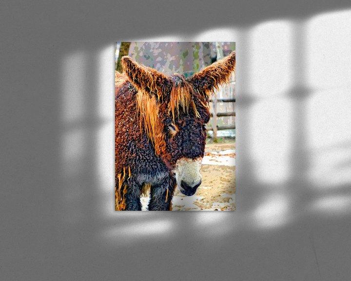 Beispiel: Poitou-Esel von Leopold Brix