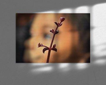 plant in op de voorgrond von Gerrit Neuteboom