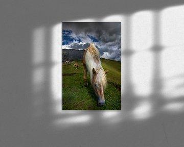 Südtirol Haflinger Pferd in den Dolomiten von Martina Weidner