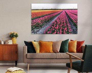 Tulpen im Norden der Niederlande von Rijk van de Kaa