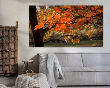 Kleurige herfstbladeren aan een tak von Michel Seelen
