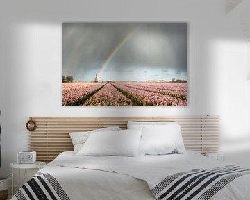 Regenboog met molen en roze hyacinten